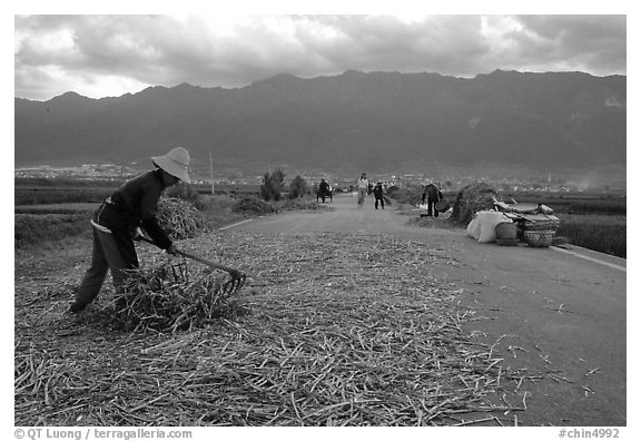 Grain layed out on a country road. Dali, Yunnan, China