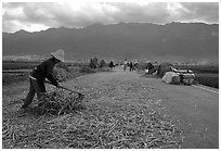 Grain layed out on a country road. Dali, Yunnan, China (black and white)