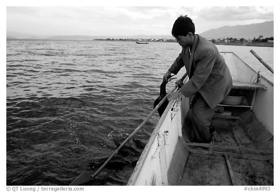 Cormorant fisherman catches one of his birds to retrieve the fish it caught. Dali, Yunnan, China (black and white)