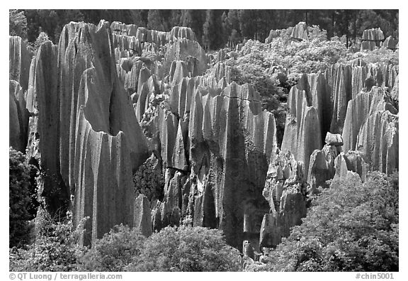 Trees and grey limestone pillars of the Stone Forest, split by rainwater. Shilin, Yunnan, China (black and white)