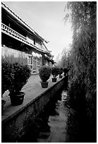 Wooden houses and vegetation near a canal. Lijiang, Yunnan, China ( black and white)