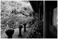 Courtyard of the Wufeng Lou (Five Phoenix Hall) with spring blossoms. Lijiang, Yunnan, China ( black and white)