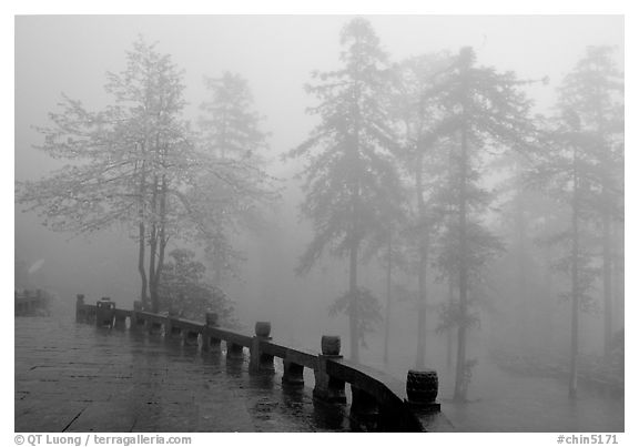 Trees outside Xiangfeng temple in mist. Emei Shan, Sichuan, China