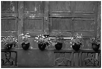 Potted flowers and wooden wall in Bailongdong temple. Emei Shan, Sichuan, China (black and white)