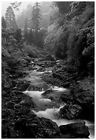 Stream between Qingyin and Hongchunping. Emei Shan, Sichuan, China (black and white)