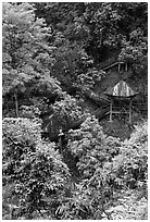 Path and pavillon on steep hillside between Qingyin and Hongchunping. Emei Shan, Sichuan, China (black and white)
