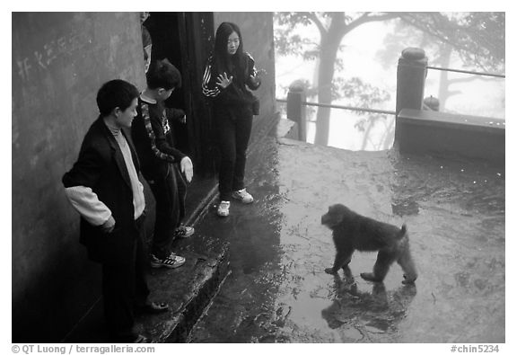 Pilgrims show the palm of their hand to an aggressive monkey, meaning they have no food, Yuxian temple. Emei Shan, Sichuan, China (black and white)