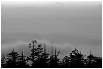 Sunset on a sea of clouds. Emei Shan, Sichuan, China (black and white)