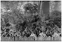 Plants and forest mural photograph, Taoyuan Airport. Taiwan ( black and white)