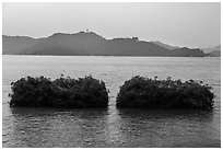 Floating gardens where plants are cultivated. Sun Moon Lake, Taiwan (black and white)