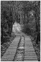 Paved path in forest. Sun Moon Lake, Taiwan (black and white)