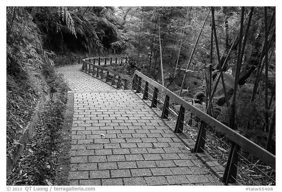 Path on Shabalan Mountain. Sun Moon Lake, Taiwan (black and white)