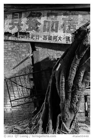 Roots and sign at night. Lukang, Taiwan (black and white)