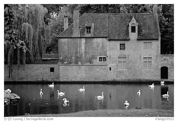 Swans, begijnhuisje, and canal. Bruges, Belgium (black and white)
