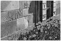 Tulips and wall, royal residence of Drottningholm. Sweden (black and white)