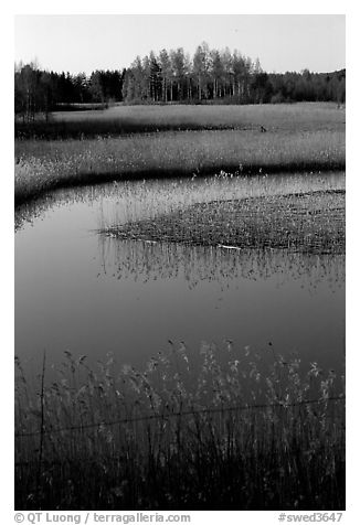 Pond. Gotaland, Sweden (black and white)