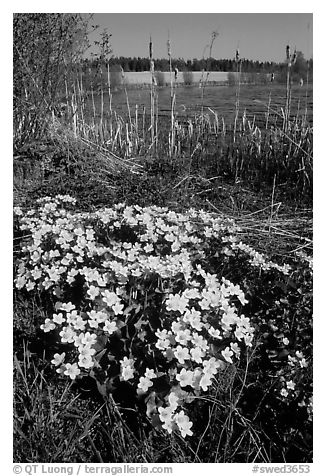 Black And White Floral. lack and white flowers