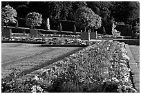 Flowers in formal gardens of the Versailles palace. France ( black and white)