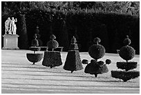 Hedged trees, Versailles palace gardens. France (black and white)