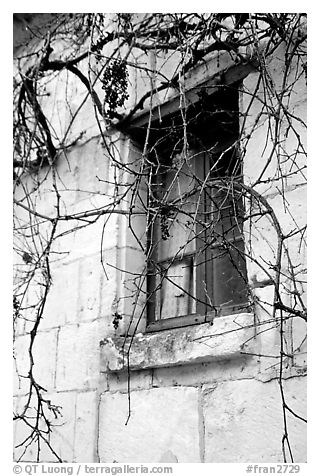 Window with dried grapes. Loire Valley, France (black and white)