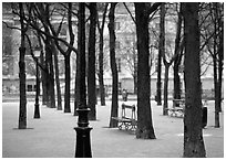 Park in winter, place Dauphine, ile de la Cite. Paris, France (black and white)
