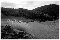 Mountain pasture in fall. Maritime Alps, France (black and white)
