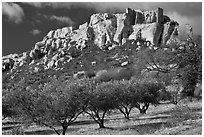 Olive trees and clifftop village, Les Baux-de-Provence. Provence, France (black and white)