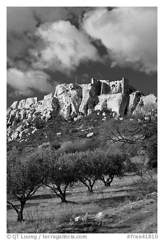 Olive orchard and village perched on cliff, Les Baux-de-Provence. Provence, France (black and white)