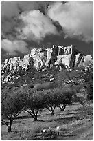 Olive orchard and village perched on cliff, Les Baux-de-Provence. Provence, France ( black and white)