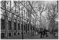 Cours Mirabeau. Aix-en-Provence, France ( black and white)