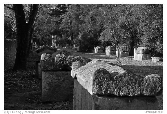 Burial grounds, Alyscamps necropolis. Arles, Provence, France (black and white)