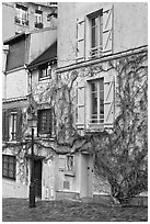 House with blue shutters and bare ivy, Montmartre. Paris, France ( black and white)