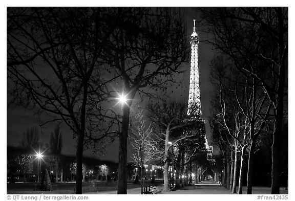 Trees in Champs de Mars and Eiffel Tower at night. Paris, France (black and white)