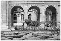 Hedges and roses in courtyard of hotel particulier. Paris, France ( black and white)