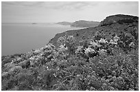 Wildflowers and Mediterranean seen from Route des Cretes. Marseille, France (black and white)