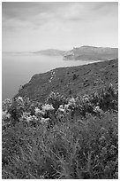Wildflowers and Mediterranean seen from Route des Cretes. Marseille, France ( black and white)