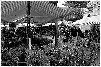 Flower Market, Nice. Maritime Alps, France ( black and white)