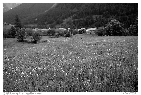 Meadow with wildflowers and village near Lautaret Pass. France (black and white)