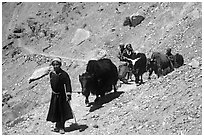 Group of people on narrow mountain trail with yaks, Zanskar, Jammu and Kashmir. India (black and white)
