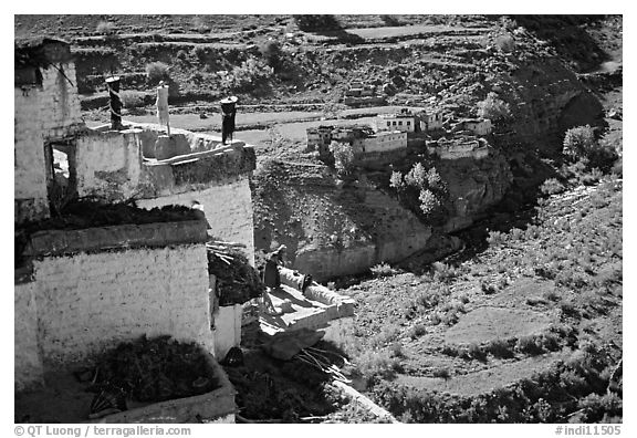 Gompa with monk on balcony overlooking verdant village, Zanskar, Jammu and Kashmir. India (black and white)