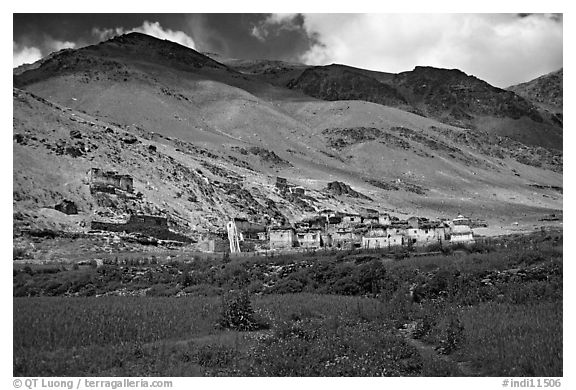 Field of barley grasses, village, and hills, Zanskar, Jammu and Kashmir. India (black and white)