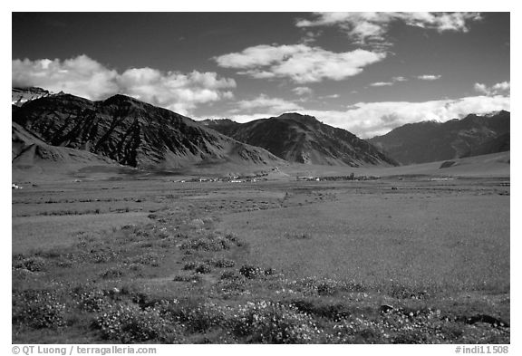 Wildflowers and cultivated fields in the Padum plain, Zanskar, Jammu and Kashmir. India (black and white)