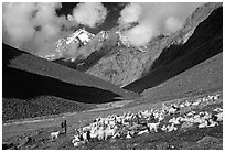 Trekker and sheep herd, Zanskar, Jammu and Kashmir. India ( black and white)