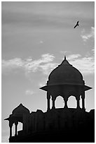 Bird and wall pavilions of Red fort, sunrise. New Delhi, India (black and white)