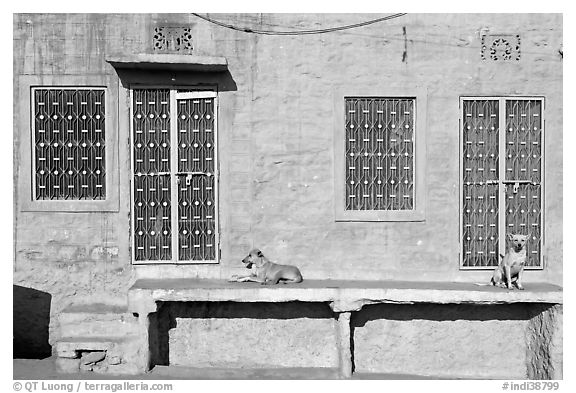 Dogs and sunlit blue house. Jodhpur, Rajasthan, India (black and white)