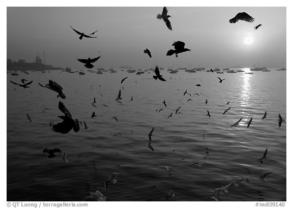 Multitude of birds flying in front of sunrise over harbor. Mumbai, Maharashtra, India (black and white)