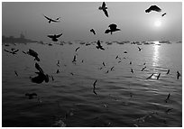 Multitude of birds flying in front of sunrise over harbor. Mumbai, Maharashtra, India ( black and white)