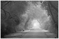 Misty path at down, Keoladeo Ghana National Park. Bharatpur, Rajasthan, India (black and white)