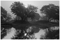 Pond at sunrise, Keoladeo Ghana National Park. Bharatpur, Rajasthan, India (black and white)