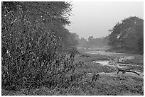 Wetlands at dawn, Keoladeo Ghana National Park. Bharatpur, Rajasthan, India (black and white)
